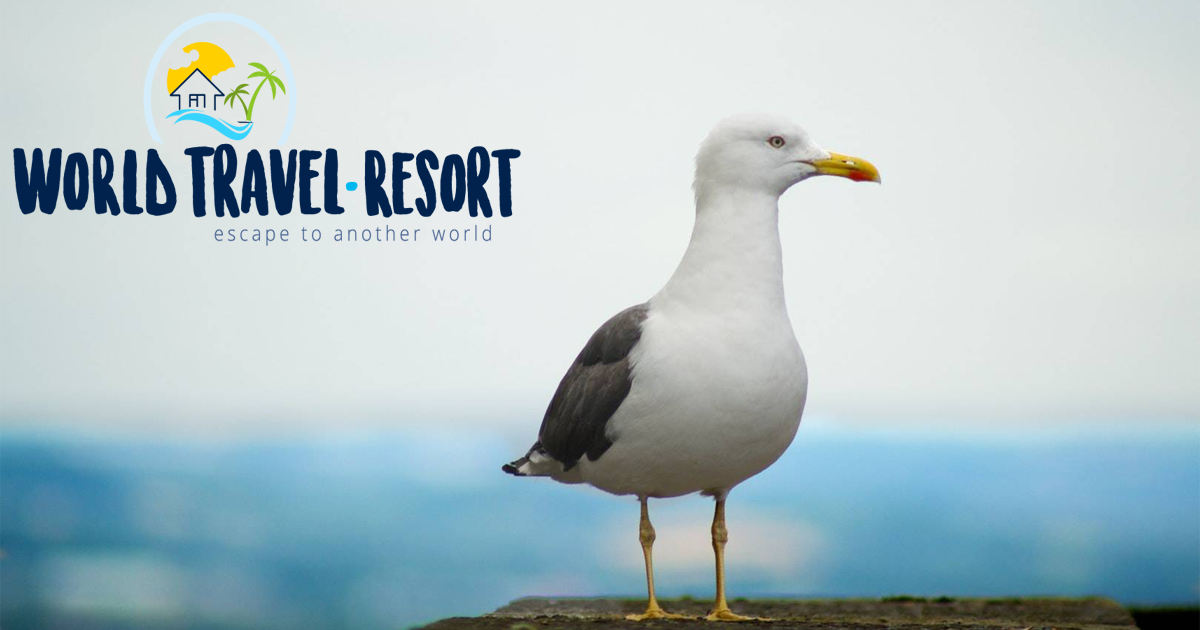 World Travel Resort | escape to another world